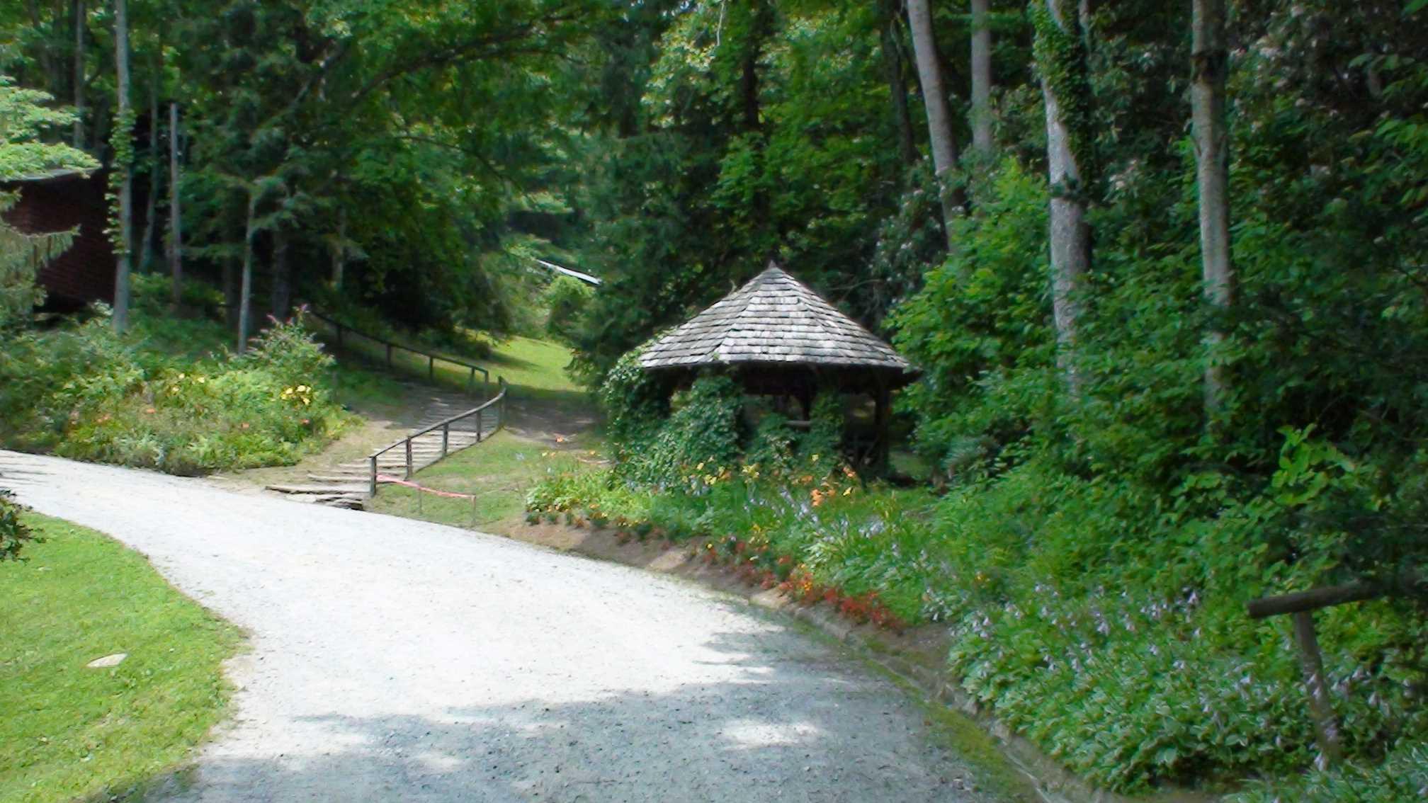 Summer Camp in North Carolina - Dr. Caputo | Palm Harbor ...